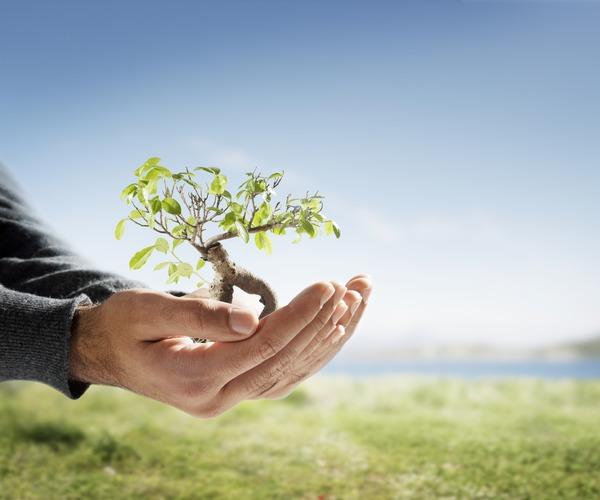 Trädplanta i kupade händer
